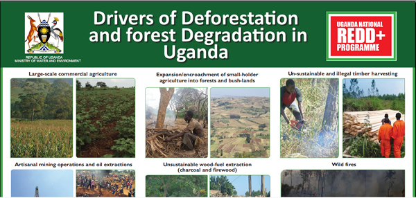 Drivers of Deforestatin and Forest Degradation in Uganda