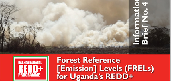Information Brief on Forest Reference Emission Levels